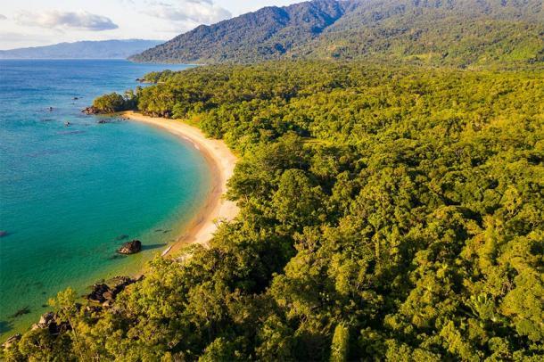 Masoala National Park in modern day Madagascar. (Reto / Adobe stock)