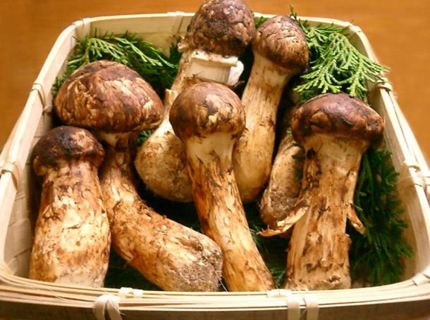 Matsutake mushroom/ancient Japanese mushroom.