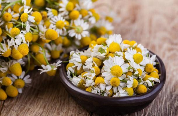 Medical chamomile