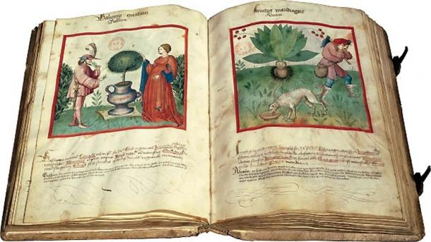 The Medieval manuscript of Paris, dedicated to wellness. Bibliothe`que nationale de France