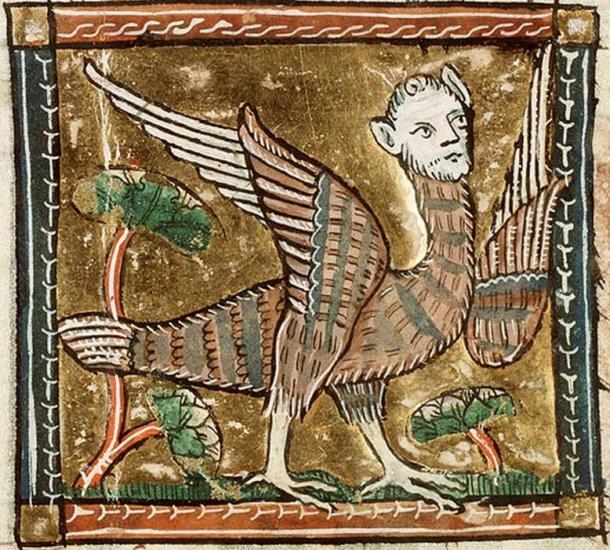 Medieval representation of a harpy, which combines the head of a woman with the body of a bird
