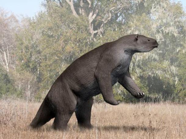 Megatherium americanum, giant ground sloth. (Nobu Tamura/CC BY SA 4.0)