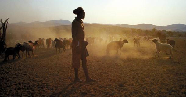 Member of a Khoisan tribe herding livestock