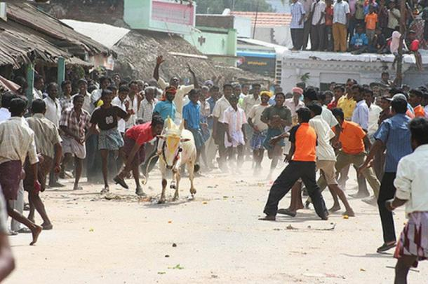 Men trying to catch the bull during a Pongal festival. (Sandhanapandian / CC BY-SA 4.0)