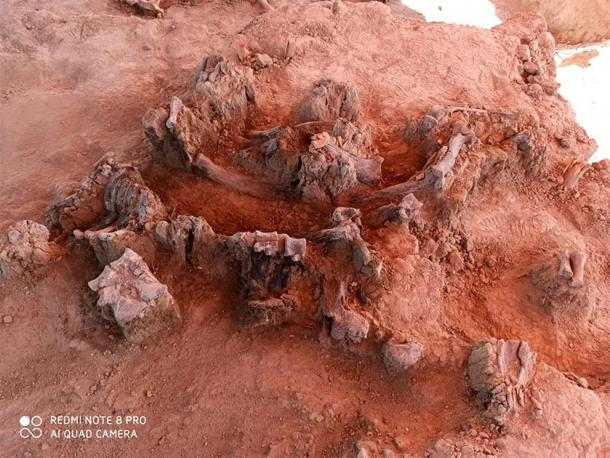 The Mexican archaeologists found the fossilized remains of almost 70 mammoths. (INAH)