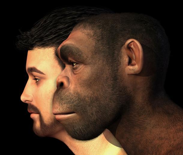 Modern Human and Homo Erectus Man Compared. (AlienCat / Adobe)