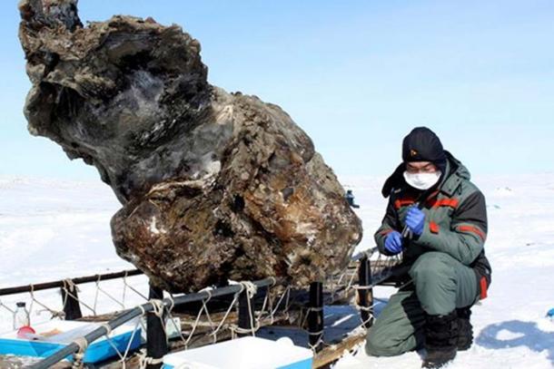 Modern-day Yakut horses, Malolyajovskiy mammoth found in 2013. Pictures: The Siberian Times, NEFU