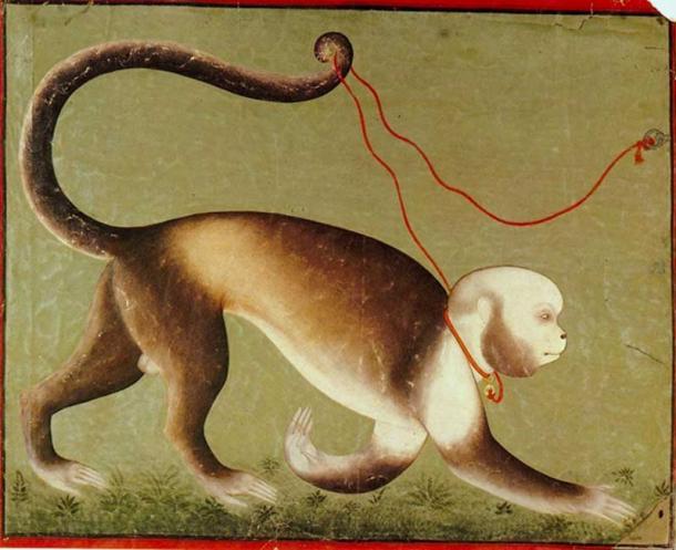 Rani's Southamerican Monkey. Mewar, ca. 1700, anonymous