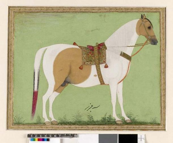 Mughal style painting of a white horse with a saddle and bridle.