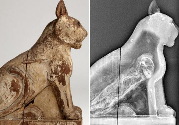 70 Million Mummified Animals in Egypt Reveal Dark Secret