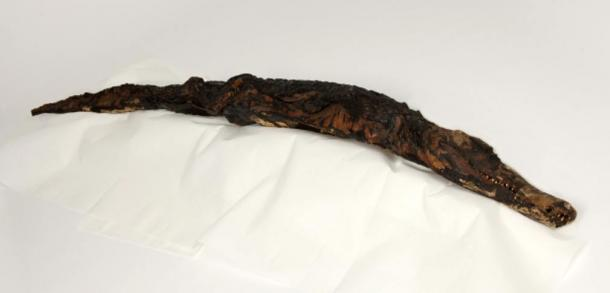 Mummified crocodile.
