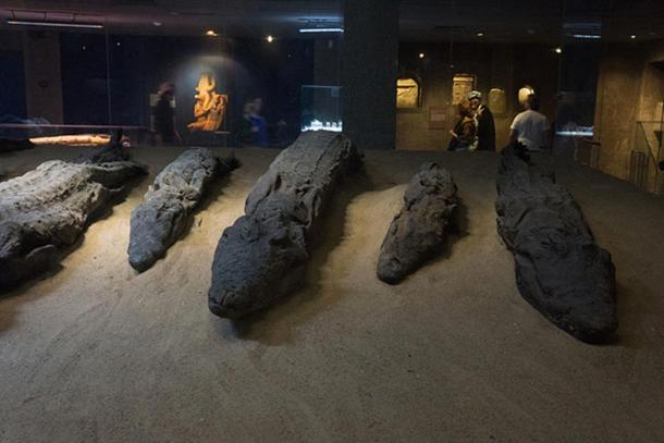 Mummified crocodiles that were offered to Sobek by worshippers.
