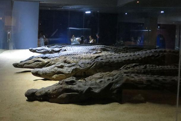 Mummified crocodiles at The Crocodile Museum, Aswan. (JMCC1 / CC BY-SA 3.0)