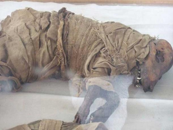 Mummified dog, Taggart School Museum, Assuyt, Middle Egypt