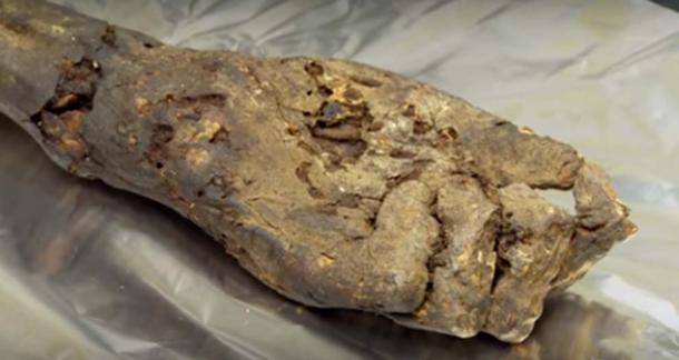 Mummified hand (circa 1000 BC) used as a source of ancient DNA