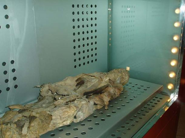 """Mummy of a Guanche individual known as """"San Andrés"""" (Saint Andrew)."""