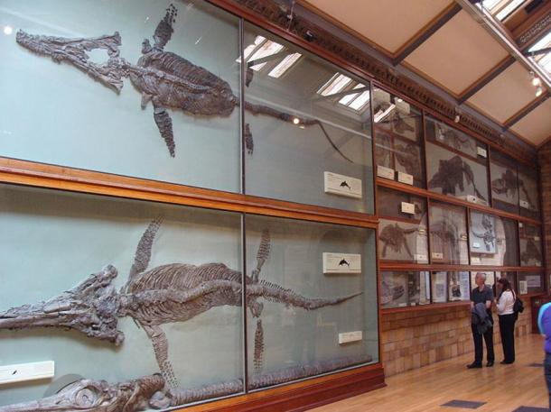 Several Ichthyosauria in the Natural History Museum of London. Human visitors show the scale of the various beasts – both great and small.