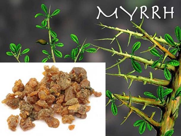 Myrrh. (Author provided)