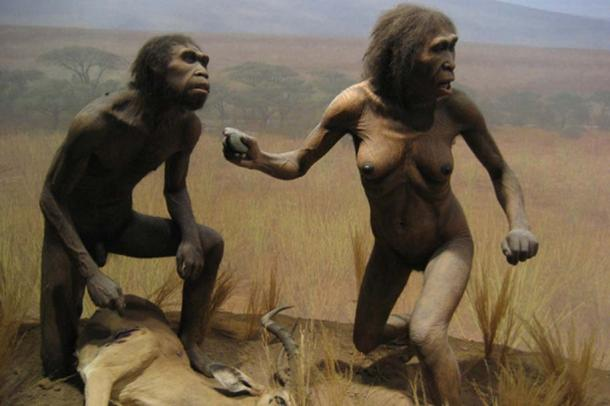 NYC Spitzer Hall of Human Origins - Homo Ergaster, dating back 2 million years.