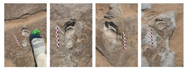 Namibian footprints. Matthew Bennett, Author provided