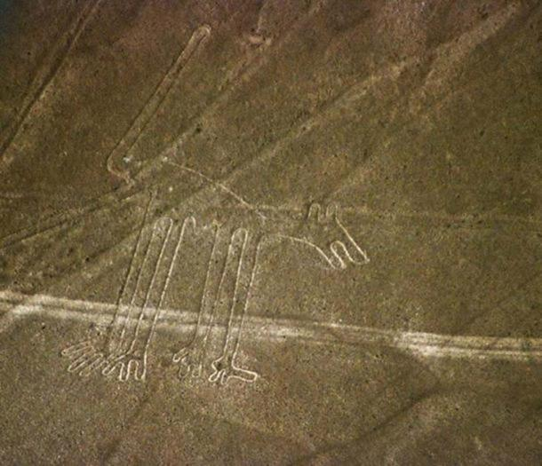 The Nazca lines figure known as the dog.