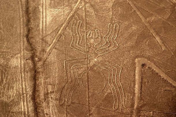The Nazca spider.
