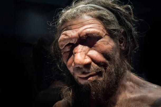 Neanderthal man at the Natural History Museum London.