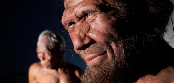 A Neanderthal model from the Britain One Million Years of the Human Story exhibition (National History Museum)