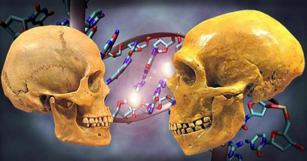 Neanderthals Twice as Old as Thought