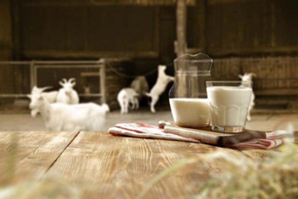 Neolithic farmers consumed cow, sheep, and goat milk. (magdal3na / Adobe Stock)