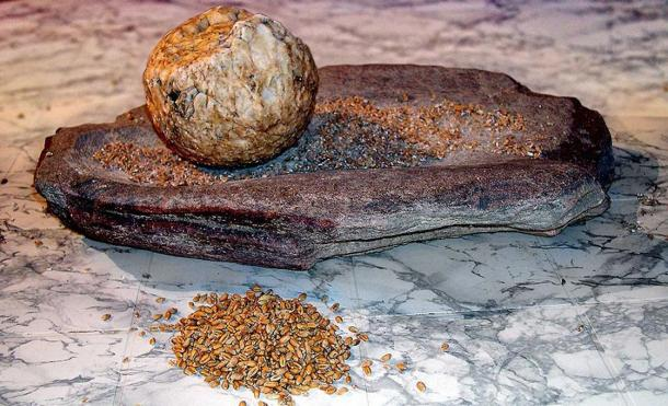 A Neolithic grinding stone for grain.