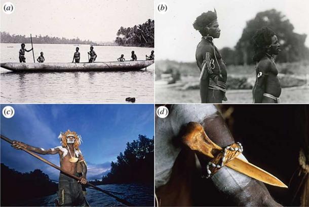 New Guinea bone daggers have social prestige and have been worn as personal adornment. (Bruno Zanzottera)