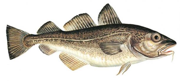 Norwegian cod – Norway's 'White Gold'