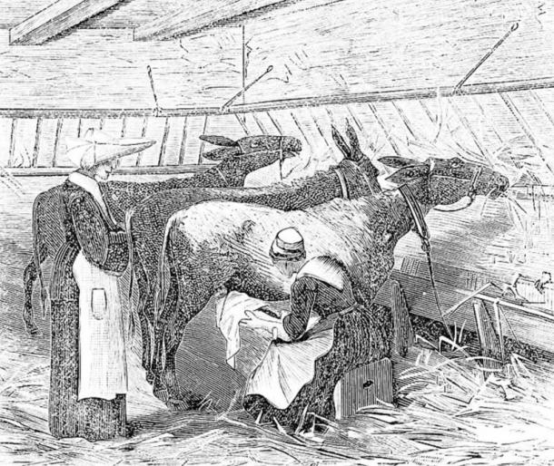 Nurse holding a baby to suckle directly from a donkey at the hospital for assisted children in Paris