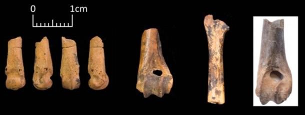 Off-cuts of hare bones as a by-product of bone bead manufacture. Left to right – distal metapodial of a hare with cuts encircling the shaft, hare humerus and radius with traces of polishing with cutmarks and a burnt hare humerus with deep transverse cuts. (Yeomans, Martin, and Richter 2019)