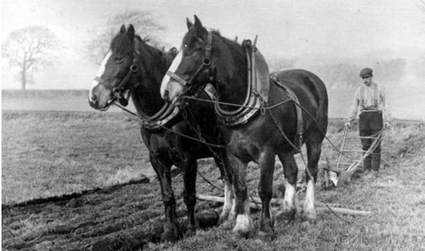 Old photographs of horses and farm workers in North Fife, Scotland