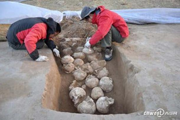 One of the pits of skulls unearthed in 2016. Image credit: CNWEST