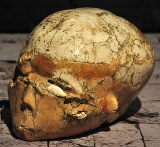 One of the plastered skulls of Jericho