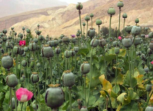 Opium (Images via Liza Knox.)