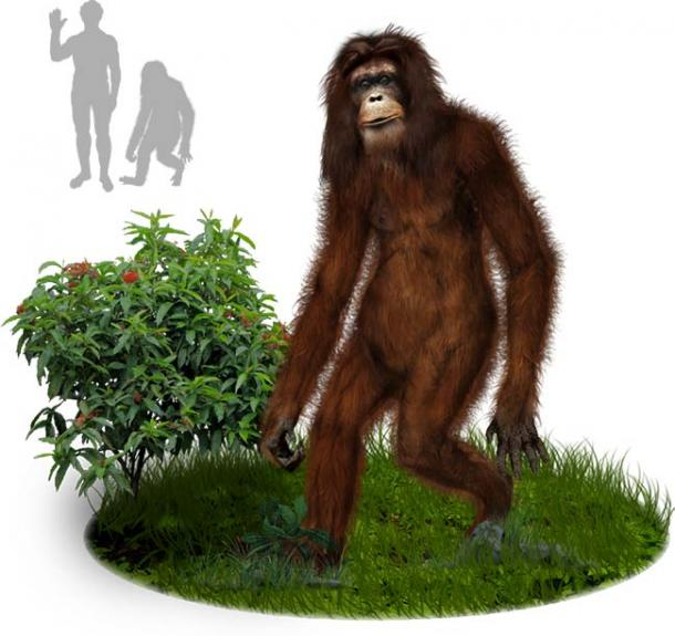An artist's impression of what an Orang Pendek little person might look like, which in this case is more primate that humanoid. (Tim Bertelink / CC BY-SA 4.0)