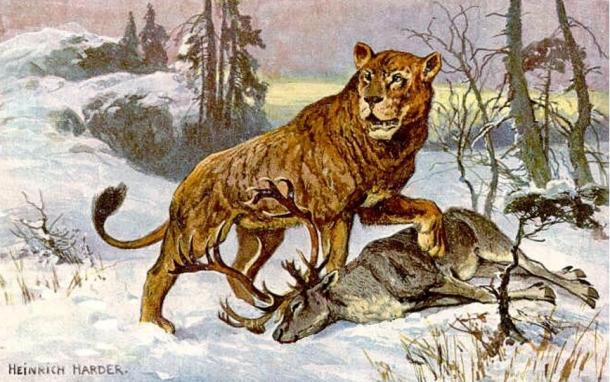 """This Painting of a Cave Lion (Panthera leo spelaea) was made to illustrate one card of a set of 30 collector cards from """"Tiere der Urwelt"""" (Animals of the Prehistoric World). From the Series III.´It is feeding on a reindeer."""
