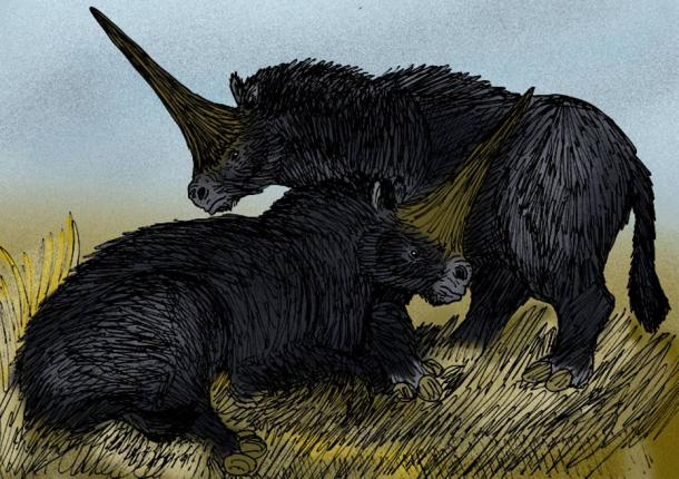 Pair of E. sibiricum (the Siberian 'unicorn').