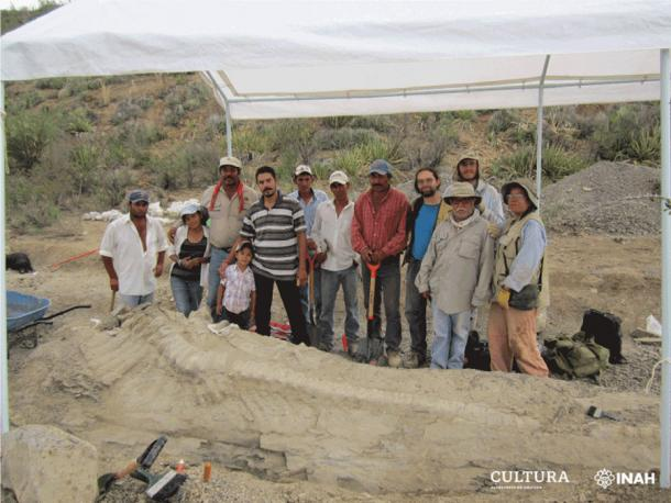 Paleontologists from INAH and UNAM unearthed the tail of the new dinosaur in Mexico in 2013. (INAH)