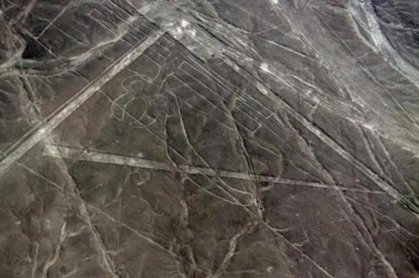 Parrot geoglyph at Nazca.