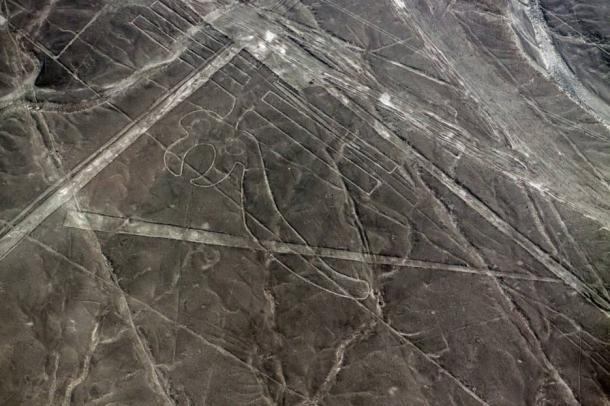 Parrot geoglyph at Nazca