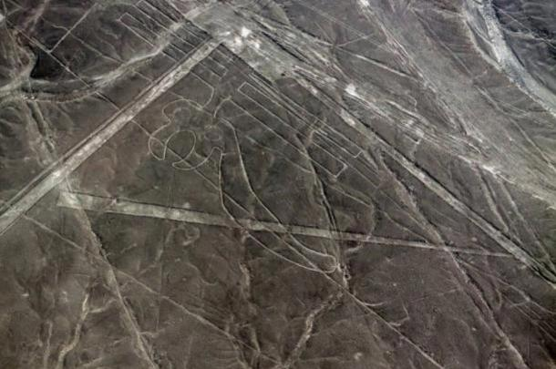 Parrot geoglyph at Nazca