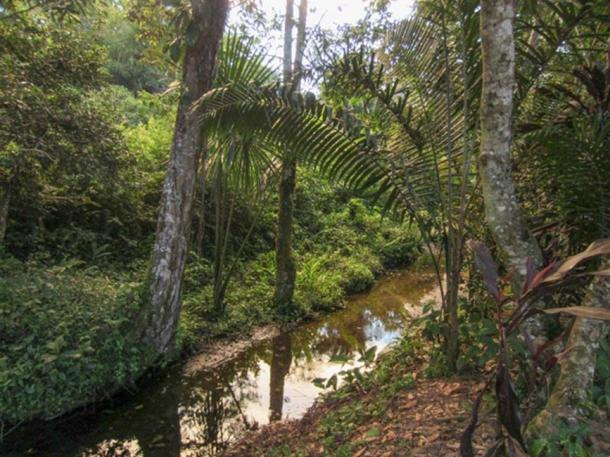Part of the jungle not far from the village.