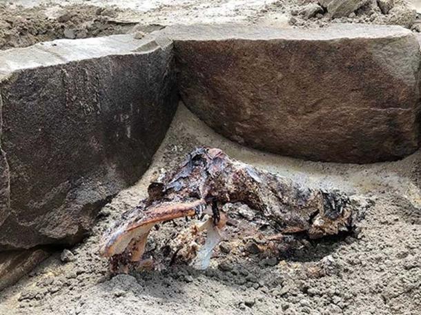 Part of the newly-discovered mummy. Credit: Marina Kilunovskaya
