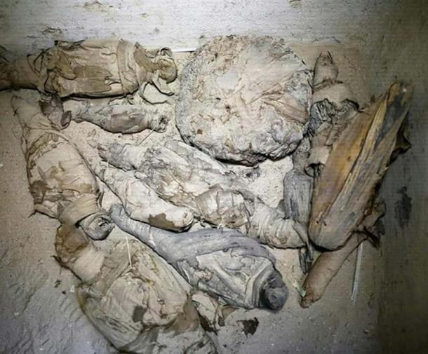 Part of the stash of mummified cats, birds and mice found in the tomb. Credit: Ministry of Antiquities