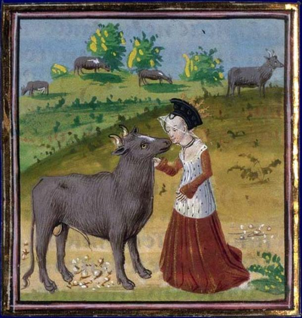 Pasiphae and the bull. (Public Domain)